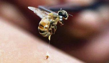 Arı Sokmasına Ne İyi Gelir?