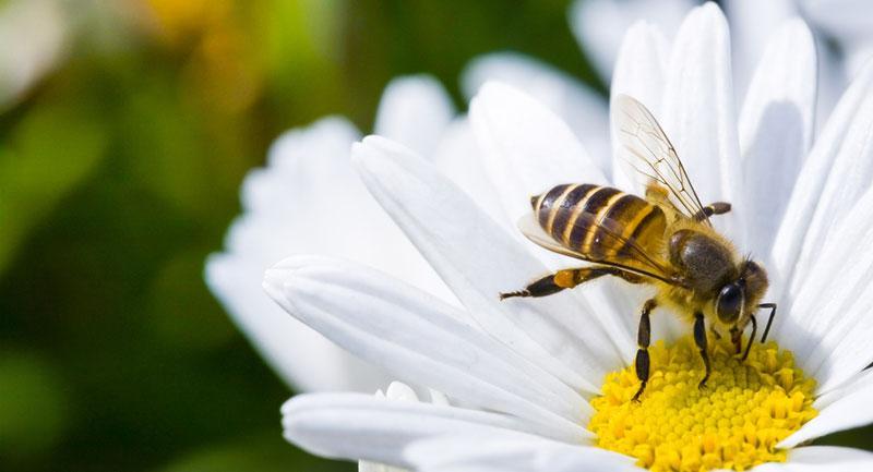 arı sokması sonrası ne yapılmalı