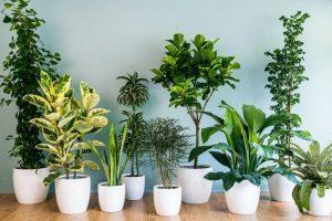 Banyoda Yetişen Bitkiler Nelerdir?