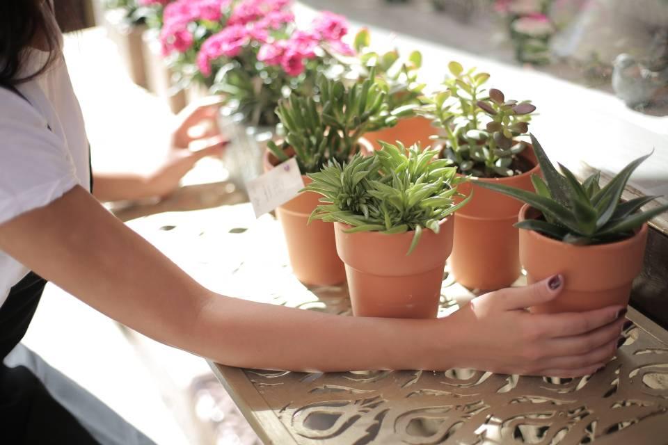 Evde Çiçek Bakımının Püf Noktaları Nelerdir?