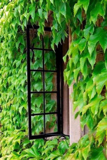 sarmaşık bitki çeşitleri