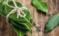 Taze Defne Yaprağı Nasıl Kullanılır?