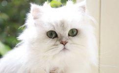 Evde Kedi Beslemek | Evde Kedi Bakımı