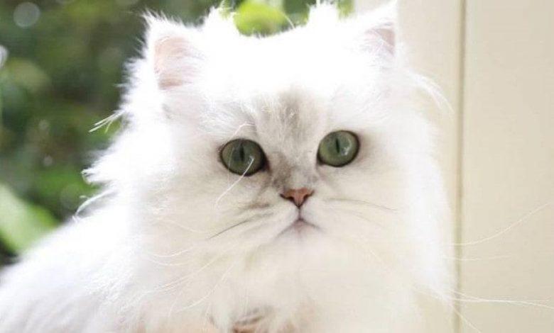 evde kedi beslemek kolay mı zor mu