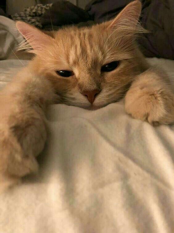 kedi beslemek zor mu